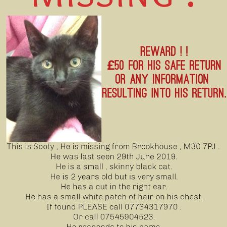 Missing Domestic Short Hair Cats in Eccles