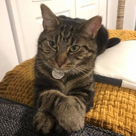 Missing Tabby Cats in Pontefract