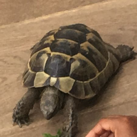 Missing Tortoise Exotics in Anerley