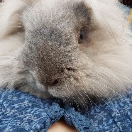 Missing Unknown - Other Rabbits in Worcester