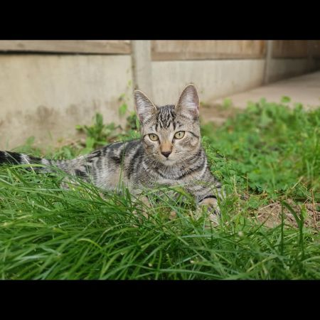 Missing Tabby Cats in Malvern