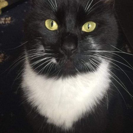 Missing Domestic Short Hair Cats in Cannock