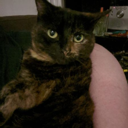 Missing Tortoiseshell Cats in Manchester