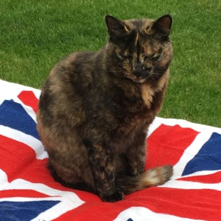 Missing Tortoiseshell Cats in Woodley, Reading