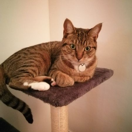 Missing Tabby Cats in Canvey Island