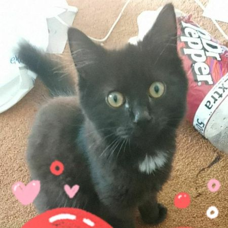 Missing Domestic Short Hair Cats in BLACKPOOL