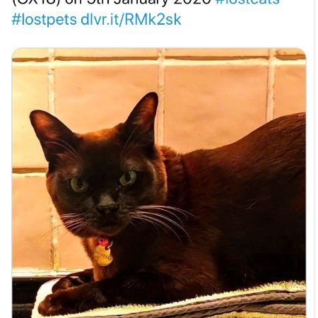 Missing Burmese Cats in Bampton
