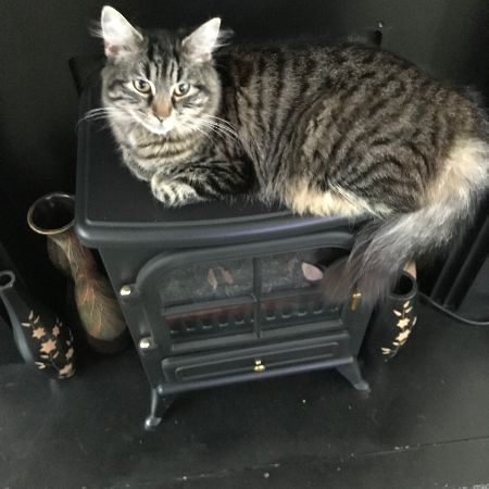 Missing Tabby Cats in Reading