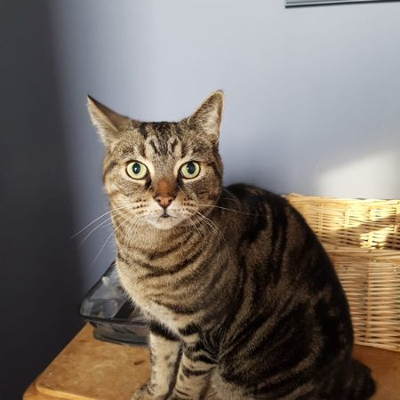 Missing Moggy Cats in London