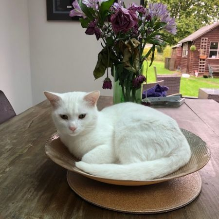 Missing Domestic Short Hair Cats in Crawley