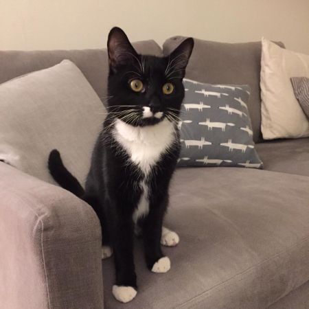 Missing Domestic Short Hair Cats in Cannon Hill