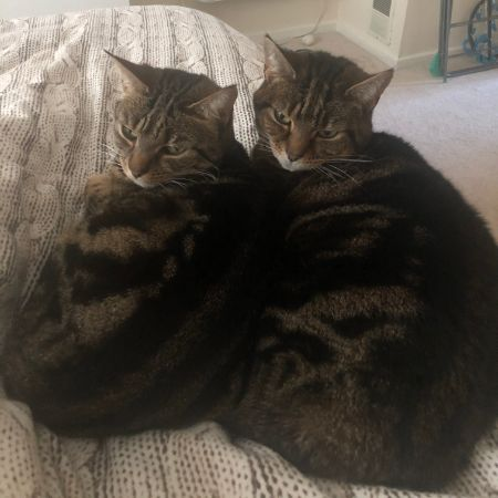 Missing Moggy Cats in Sheldon Birmingham