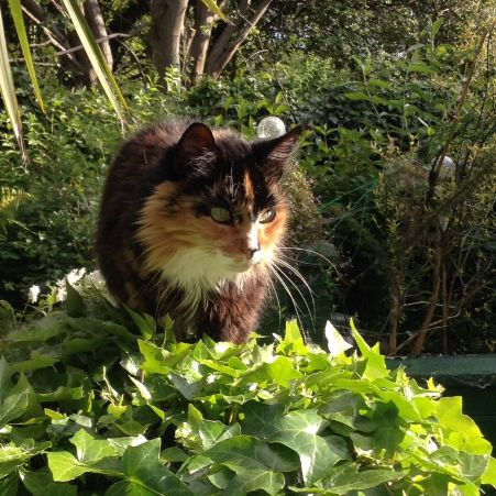 Missing Tortoiseshell Cats in Gorton