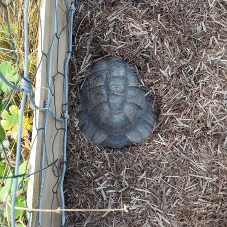 Missing Tortoise Exotics in Broadclyst Station