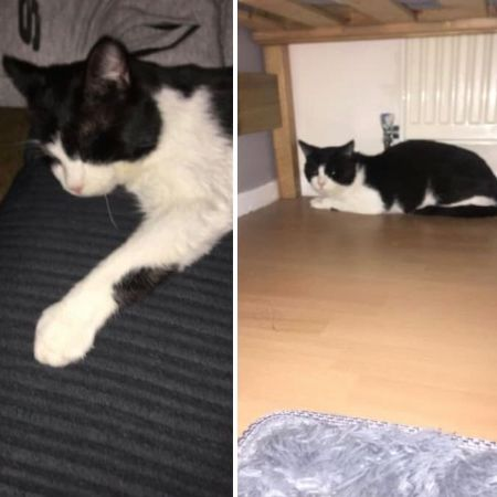 Missing Domestic Short Hair Cats in Wrose