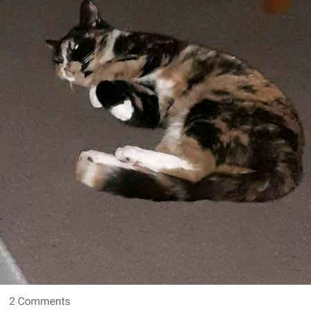 Missing Tortoiseshell Cats in Ludlow