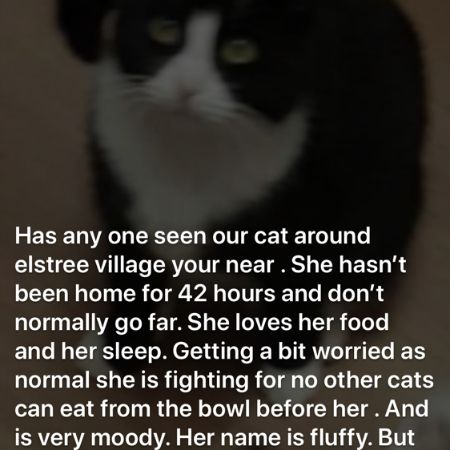 Missing Domestic Short Hair Cats in Elstree And Borehamwood