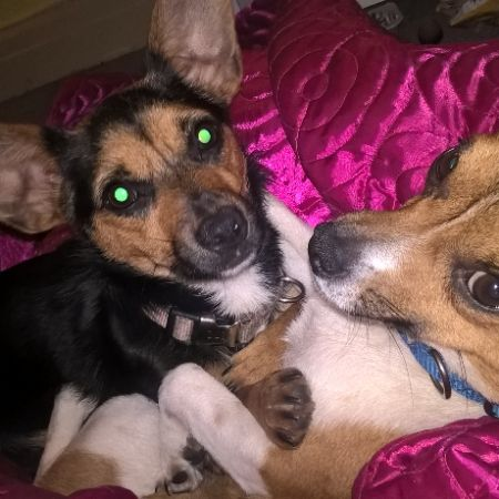 Missing Cross Mixed Dogs in Lindfield