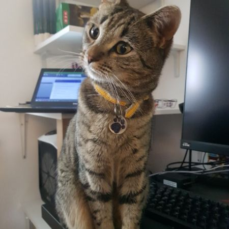 Missing Tabby Cats in Wooburn Green