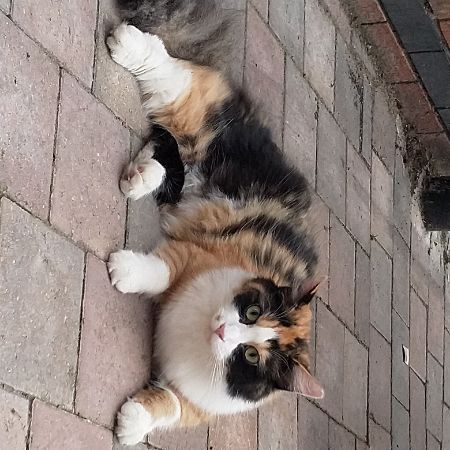 Missing Tortoiseshell Cats in South Normanton