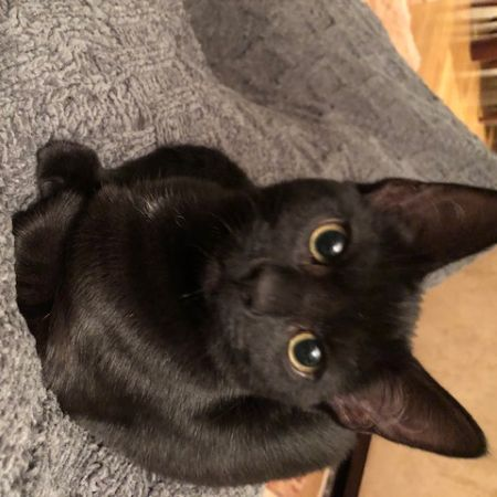 Missing Domestic Short Hair Cats in London