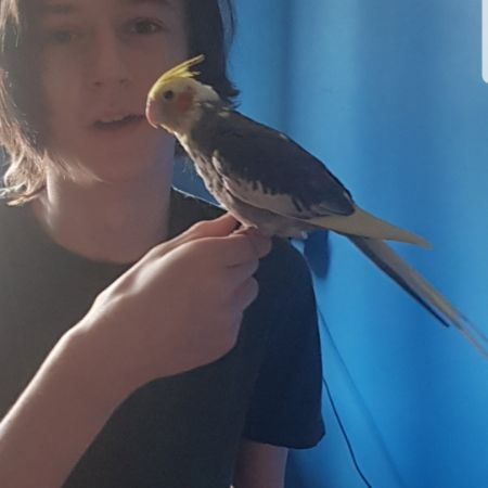 Missing Cockatiel Birds in Stevenage