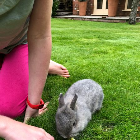 Missing Dwarf Rabbits in Barrow-in-Furness