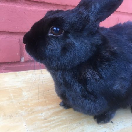 Missing Unknown - Other Rabbits in Ely