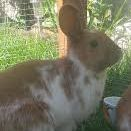 Missing Unknown - Other Rabbits in Handsworth Wood