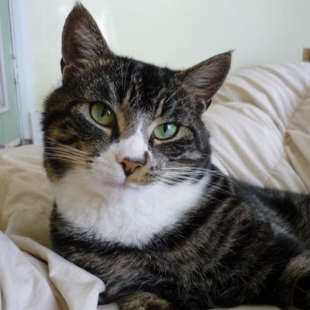Missing Domestic Short Hair Cats in Epsom