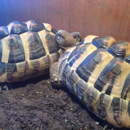 Missing Tortoise Exotics in Kynnersley