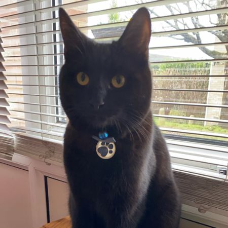 Missing Domestic Short Hair Cats in Taplow