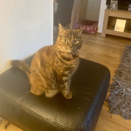 Missing Moggy Cats in Ellesmere Port