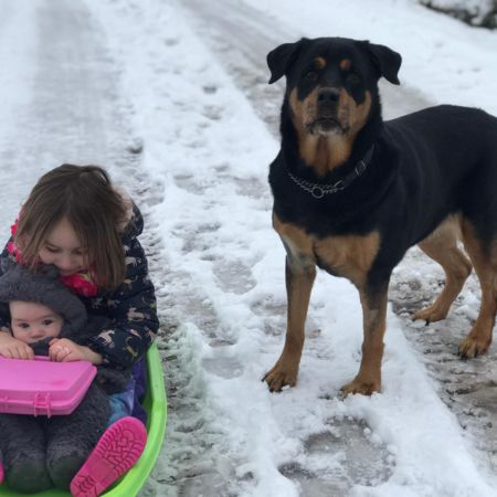 Missing Rottweiler Dogs in Breedon On The Hill