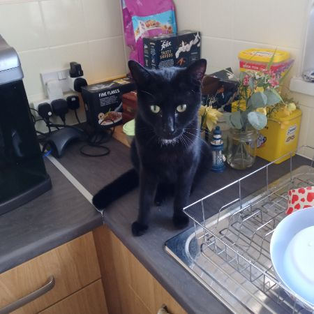 Missing Mixed Breed Cats in Horning