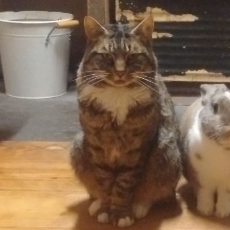 Missing Tabby Cats in Canterbury